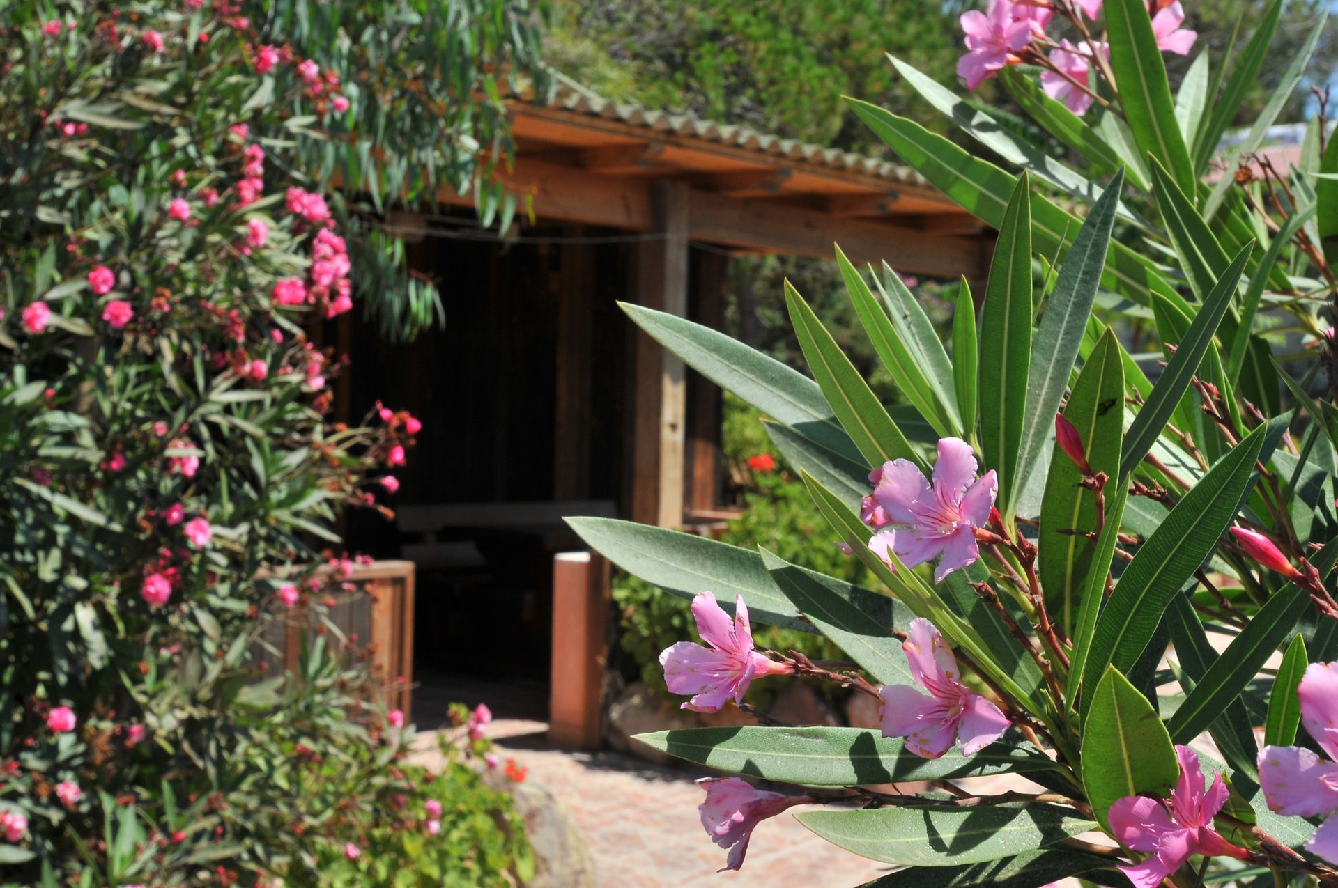 Bungalow Chalet e Camping